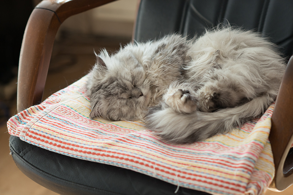 Sleeping cat by akk_rus, on Flickr