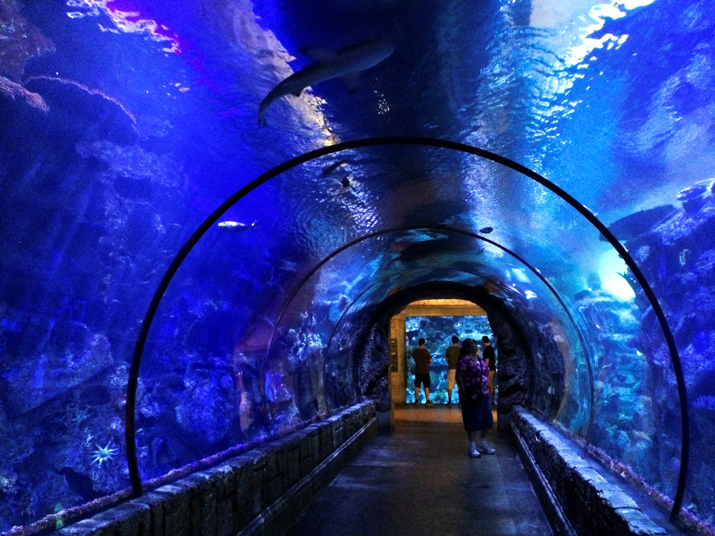 Mandalay Bay Aquarium - Underwater Tunne by jdnx, on Flickr