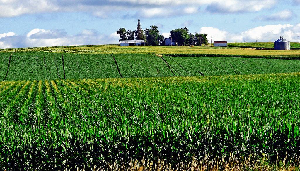 Corn Fields, Iowa Farm 7-13 by inkknife_2000 (8 million views +), on Flickr
