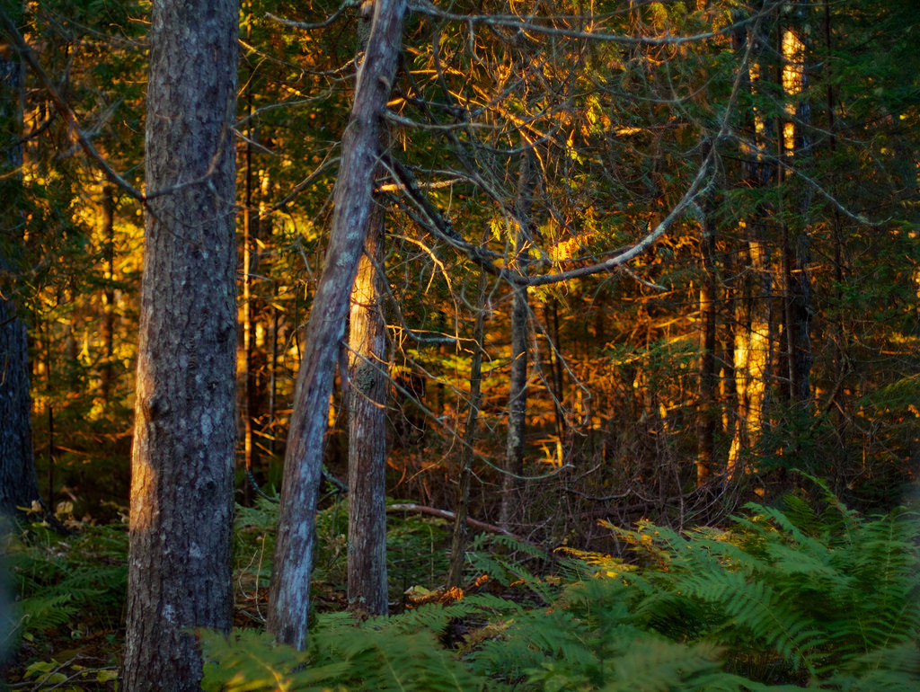 The woods on fire (in the morning) by Unhindered by Talent, on Flickr