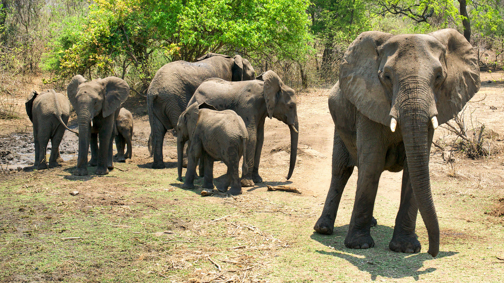 Elephants at Majete wildlife reserve by David Davies, on Flickr