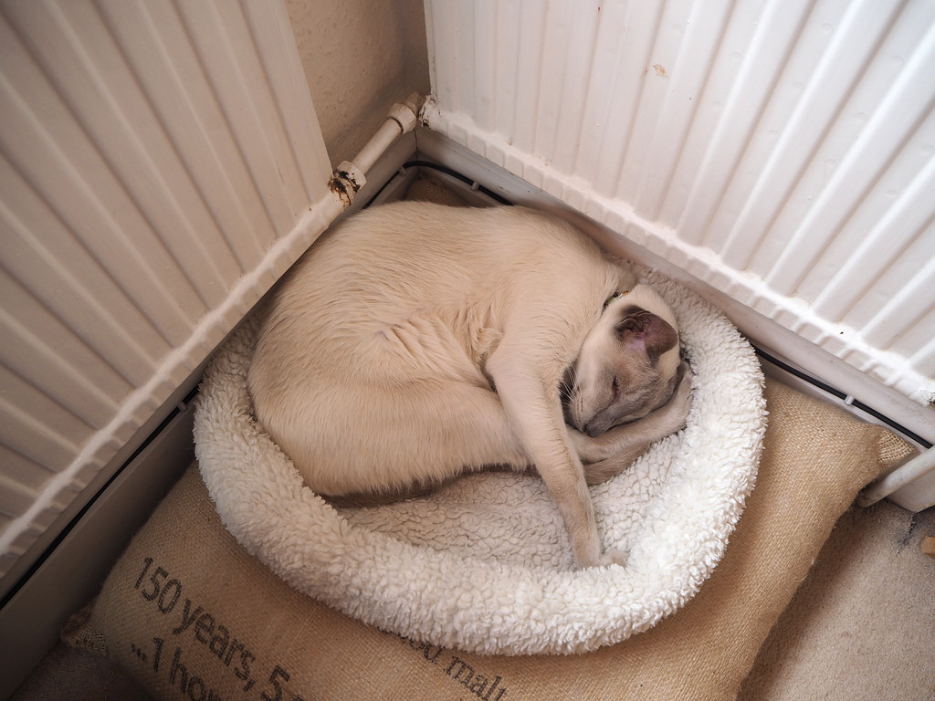 A Curled Up Sleeping Cat by foilman, on Flickr
