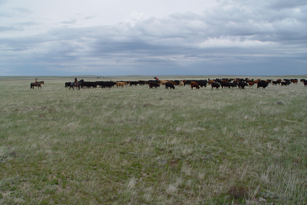 Moving cattle on the Northern Plains by USDAgov, on Flickr