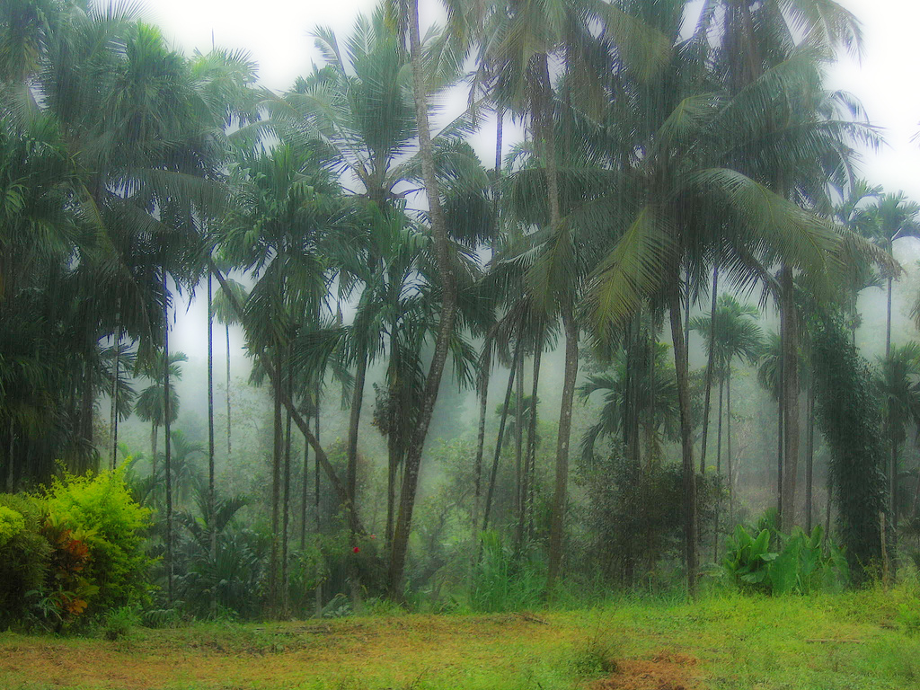 Monsoon - Karnataka by antkriz, on Flickr