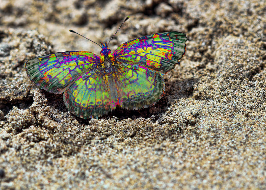 Psychedelic Butterfly Dreams @ Ness Cree by Kyla Duhamel, on Flickr