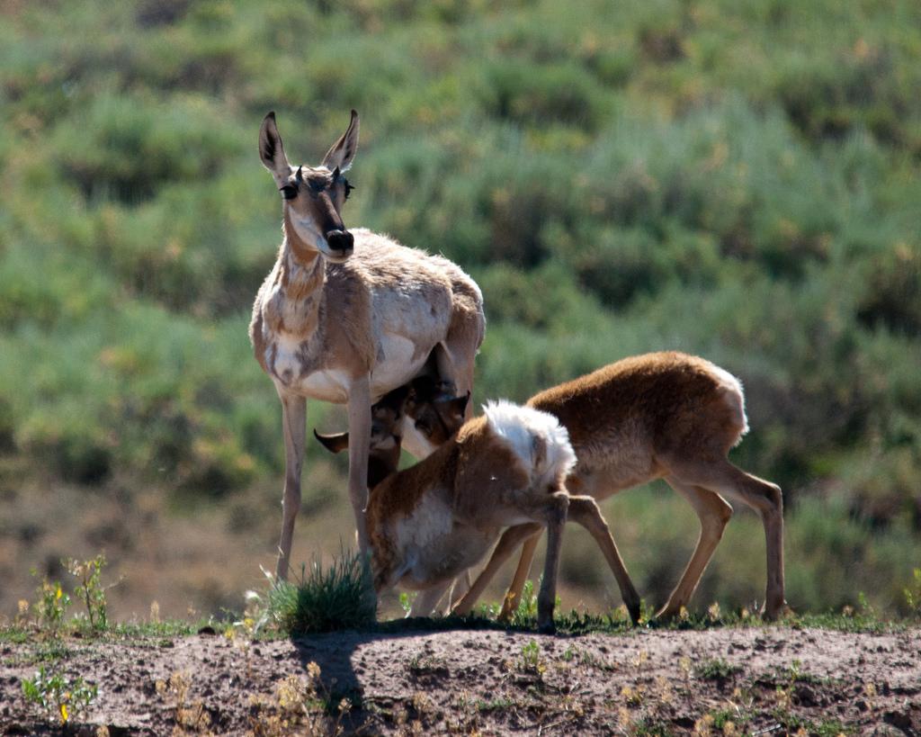 My Public Lands Roadtrip: Wildlife in Wy by mypubliclands, on Flickr