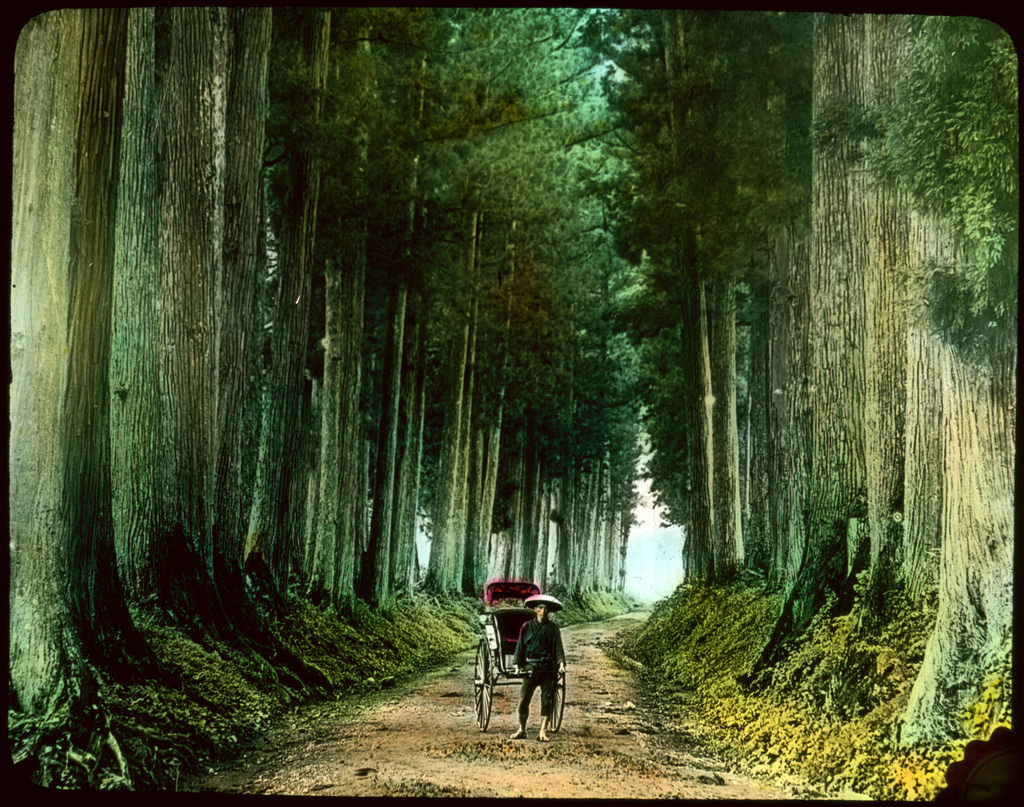 Man with rickshaw on tall tree lined dir by UVicLibraries, on Flickr