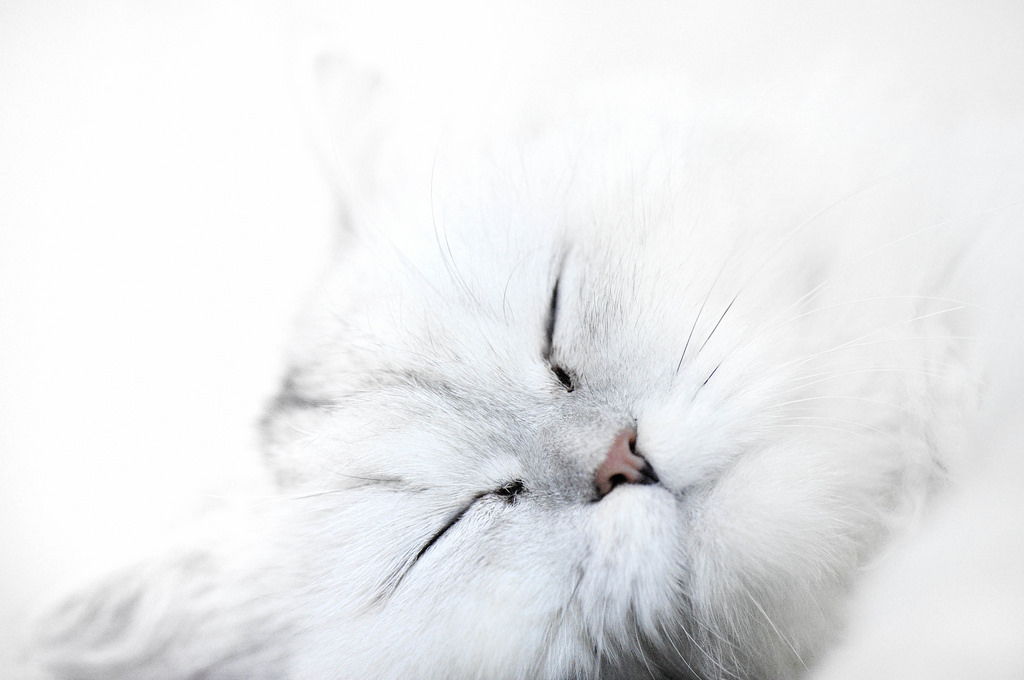Sleeping Cat by Pai Shih, on Flickr