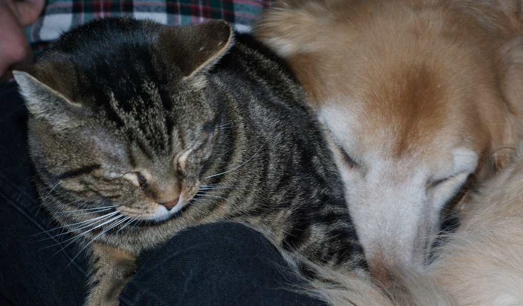 Dogs and Cats Sleeping Together.....Mass by pmarkham, on Flickr