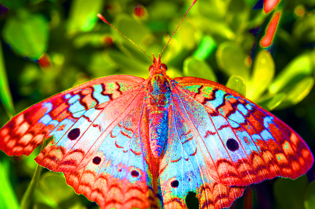 Acid Butterfly by tiswango, on Flickr