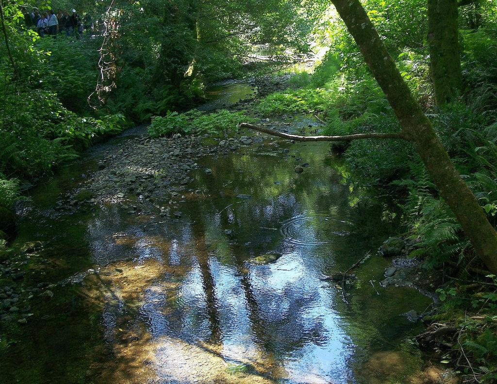 USA (San Francisco, CA) Muir Woods creek by ustung, on Flickr
