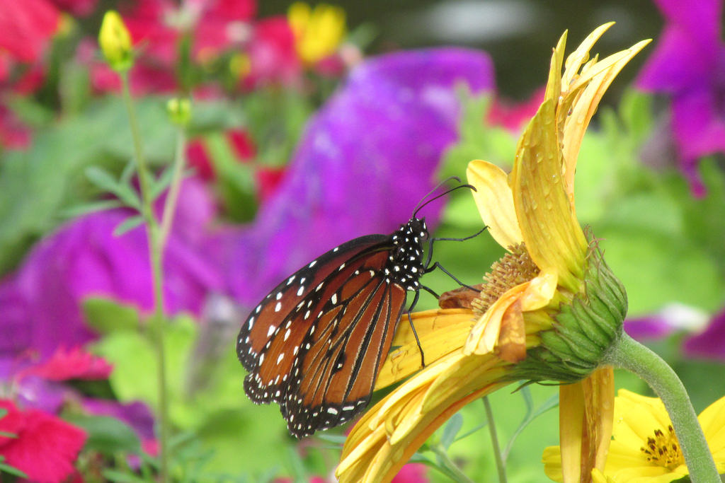 Butterfly Garden by Thanks for over 2 million views!!, on Flickr