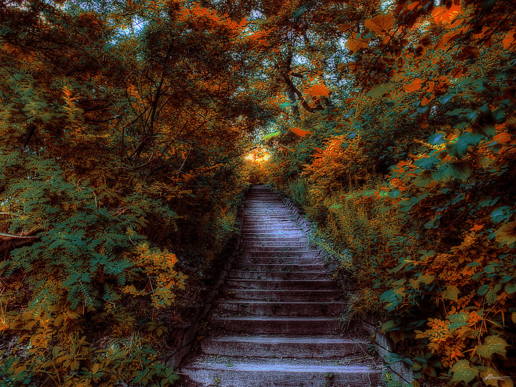 high park by paul bica, on Flickr