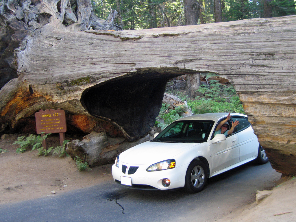 Tunnel Tree at Sequoia National Park by GregTheBusker, on Flickr