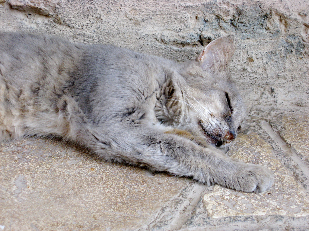 Sleeping cat - Holy Monastery of St Nich by Glen Bowman, on Flickr