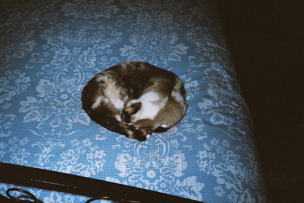 Ball of Fluff - Sleeping cat by Matthew Paul Argall, on Flickr
