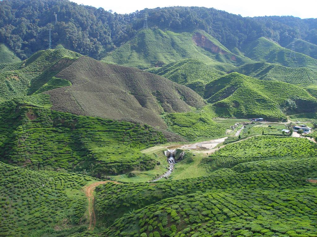 Boh Tea Plantation, Cameron Highlands by kaeru.my, on Flickr