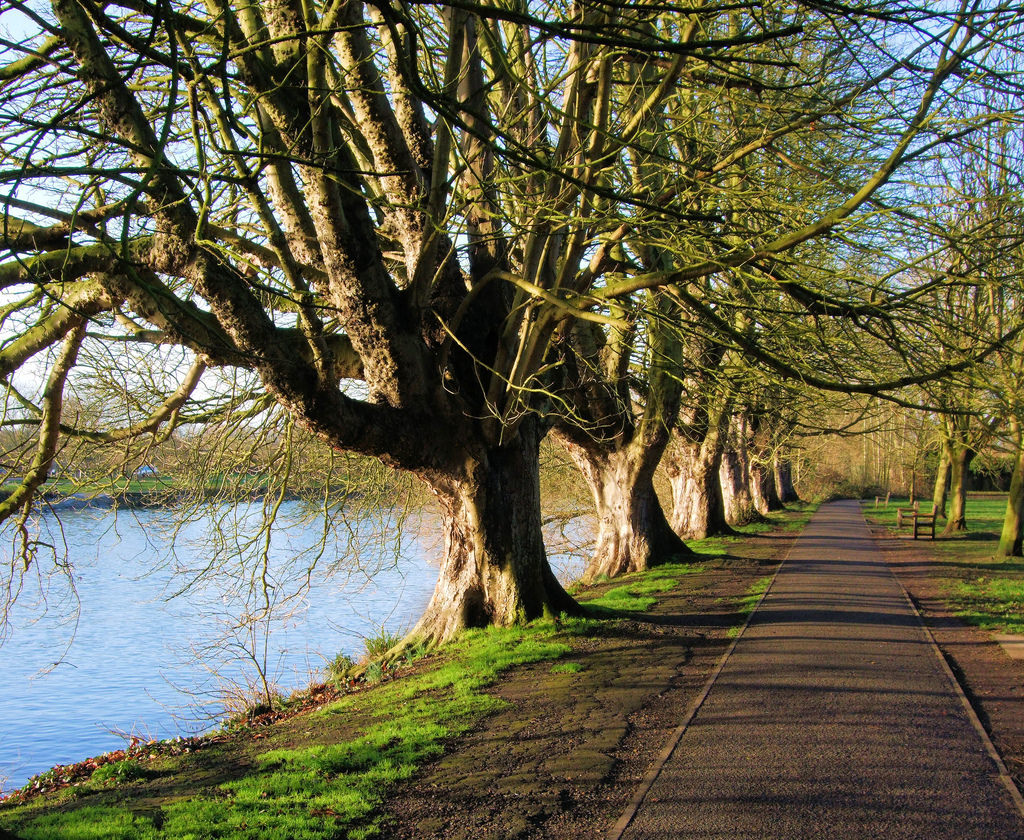 Trees By The Thames In Orleans Gardens, by Jim Linwood, on Flickr