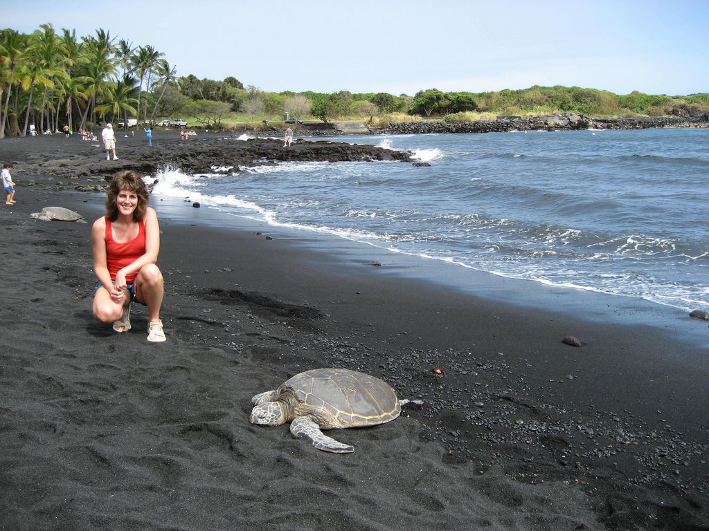 Hawaii: Green Sea Turtles at Punalu'u Bl by S Carpenter, on Flickr