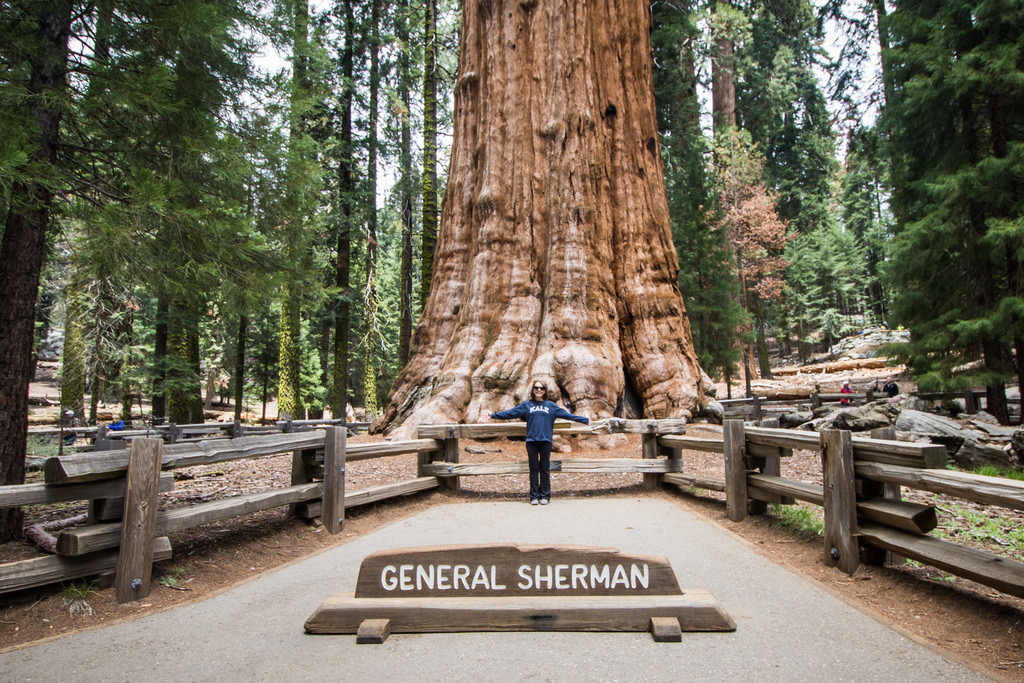 The General Sherman tree - Sequoia Natio by m01229, on Flickr