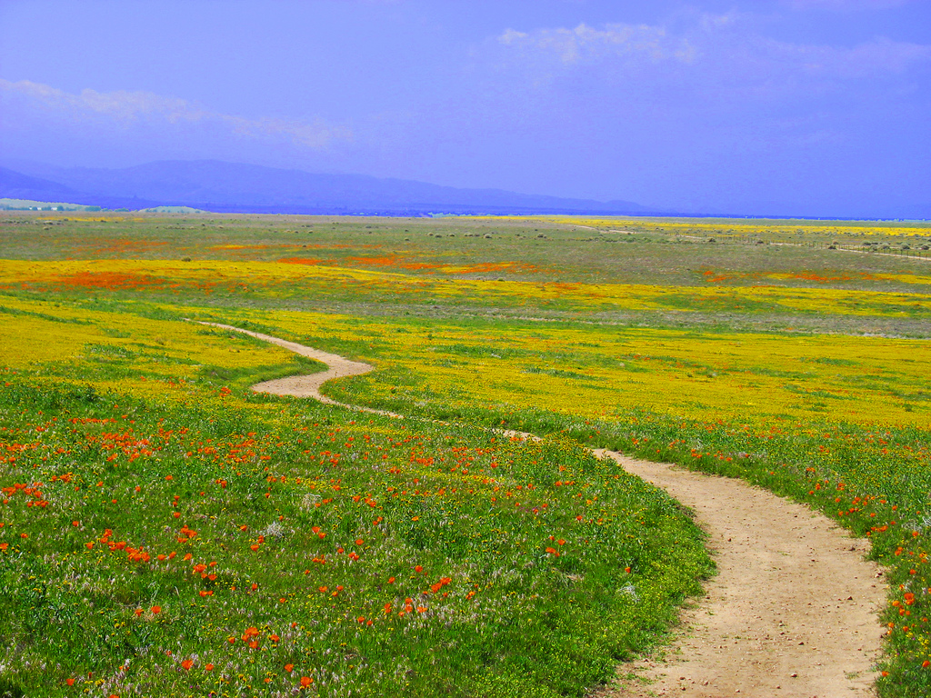 California Wildflowers by Rennett Stowe, on Flickr