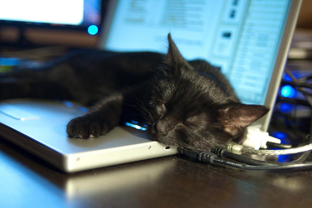Not Death Cat by Ryan Tir, on Flickr