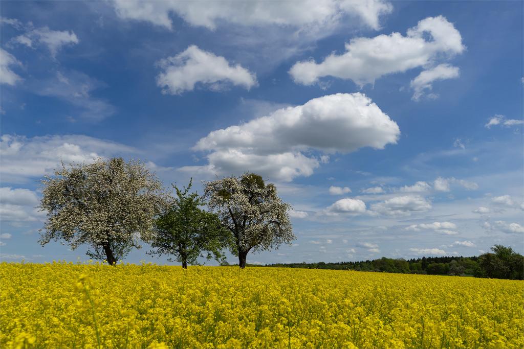 Wolkenbilder by Norbert Reimer, on Flickr