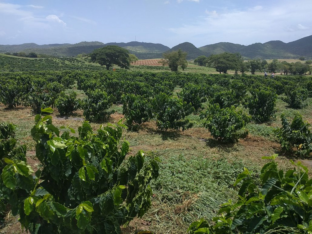 Coffee farm on the southern part of Puer by USDAgov, on Flickr