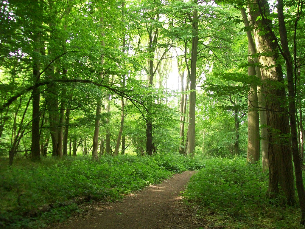 Brooches Wood, Stevenage by Peter O