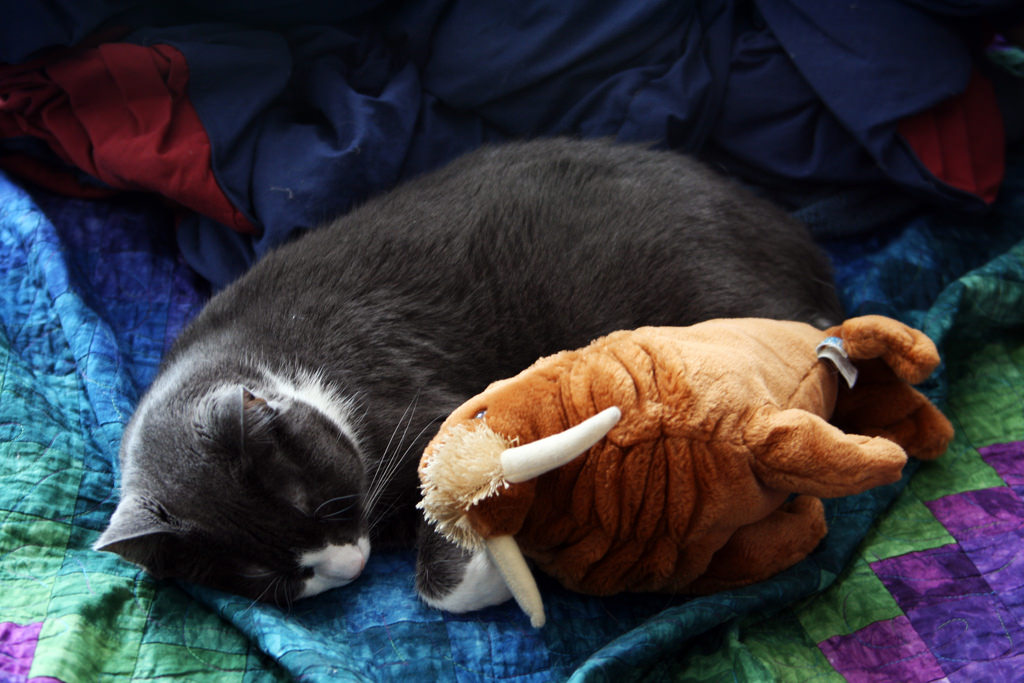 Sleeping memes by quinn.anya, on Flickr