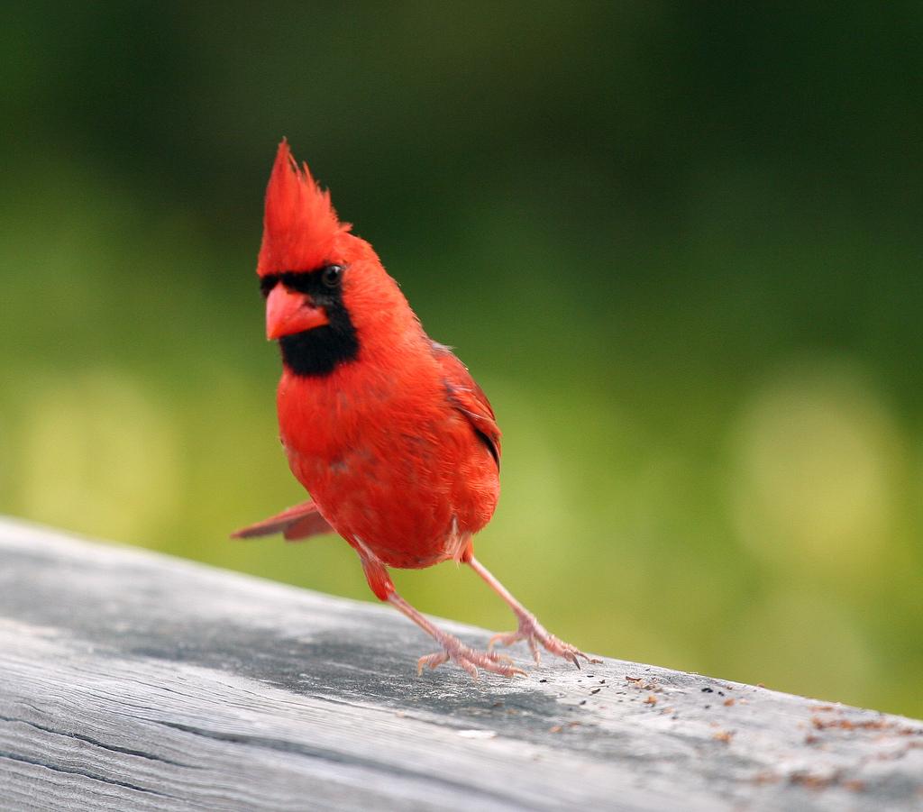 a VERY silly bird! by Dawn Huczek, on Flickr