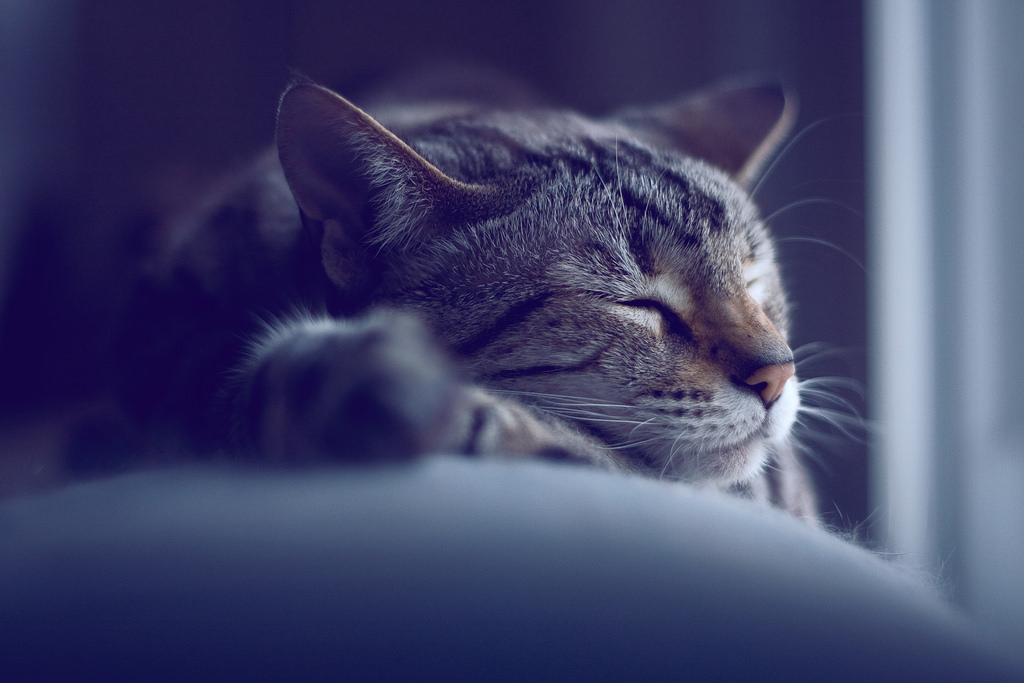 Sleeping Cat by carianoff, on Flickr