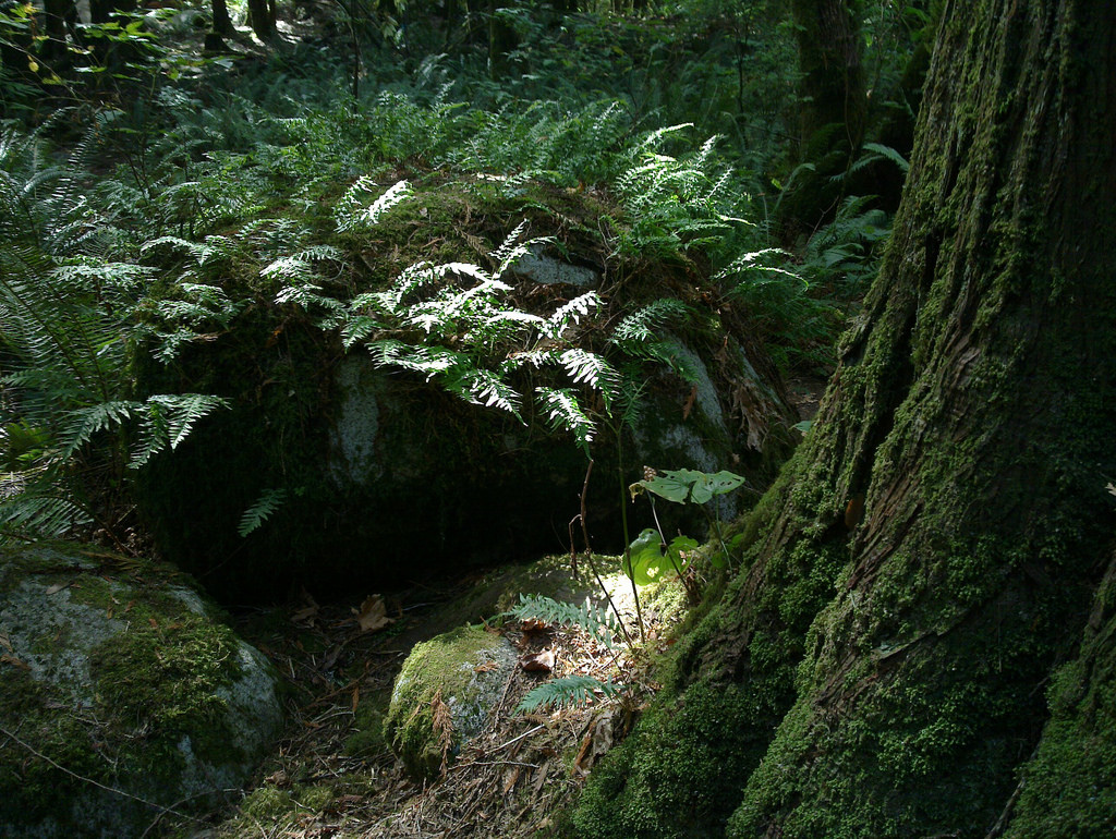 Jurassic Forest by Qole Pejorian, on Flickr
