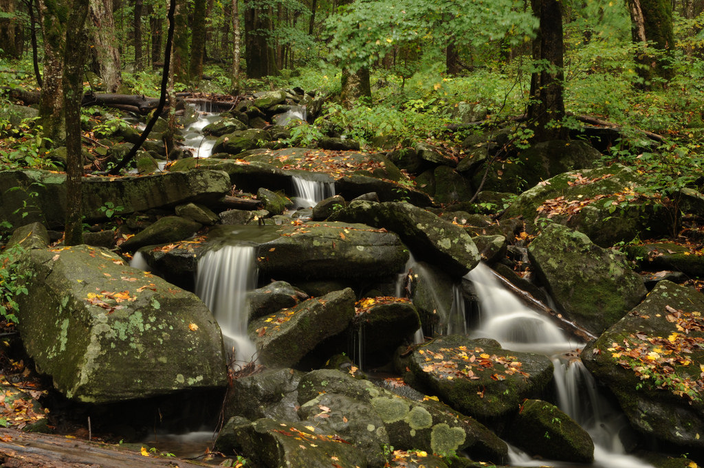 Great Smoky Mountains National Park by cwwycoff1, on Flickr