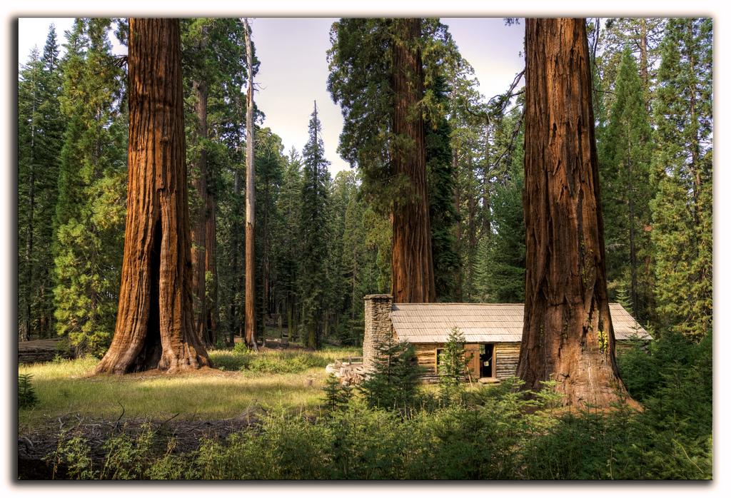 Secuoyas gigantes, giant sequoias. by Vvillamon, on Flickr