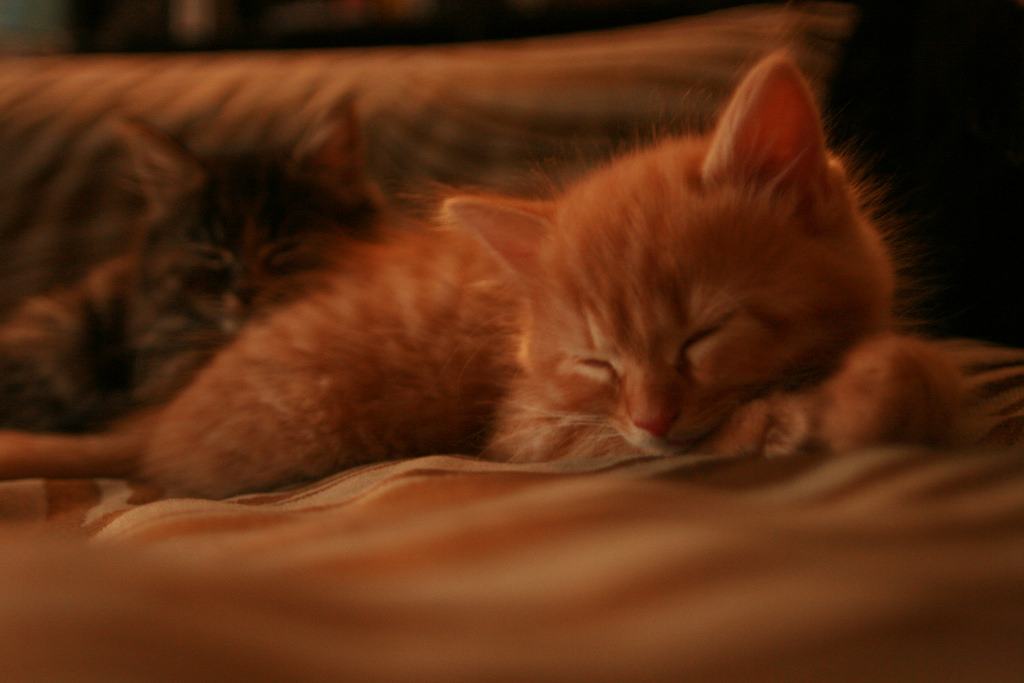 Sleeping kittens by nicolafchild, on Flickr