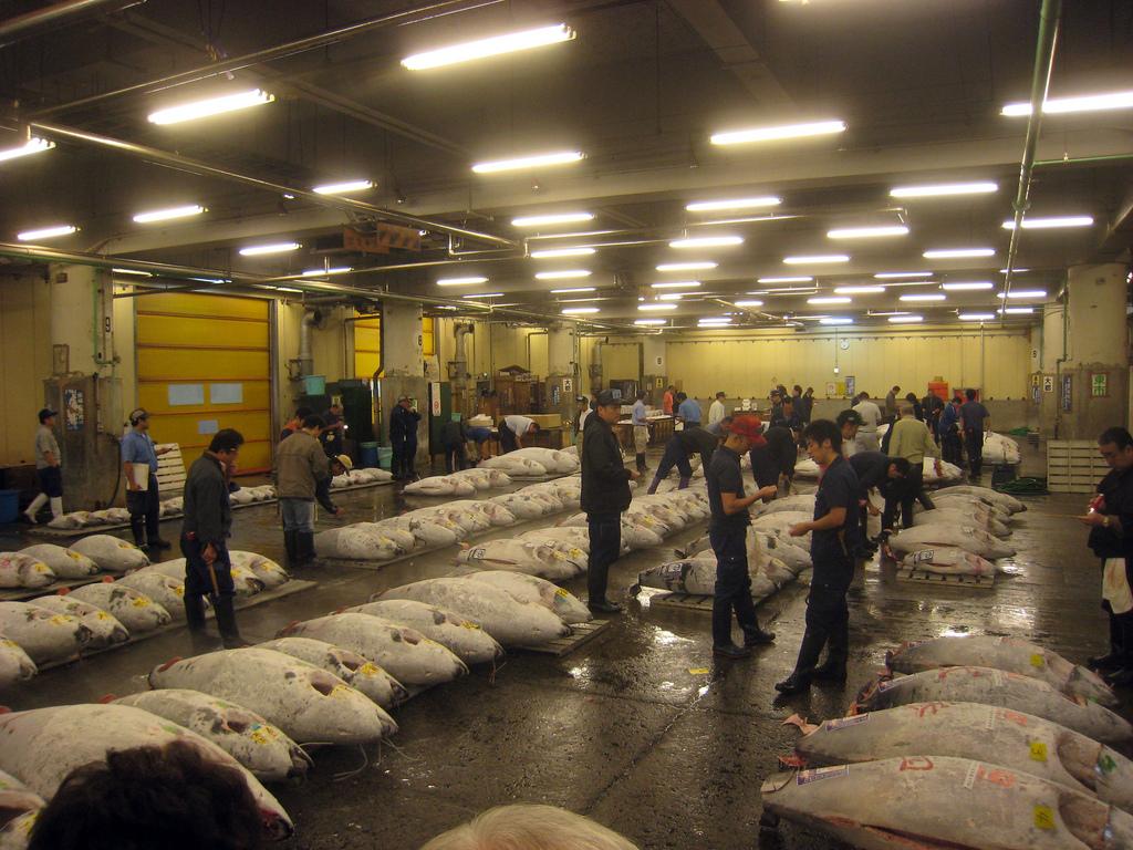 Day 5 - Tsukiji Fish Market Tuna Auction by JoshBerglund19, on Flickr