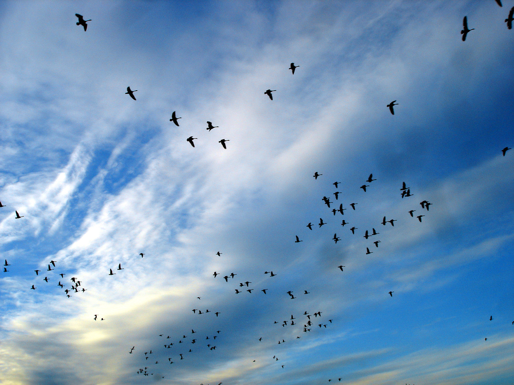 Birds Flying in Front of Clouds by Zeusandhera, on Flickr