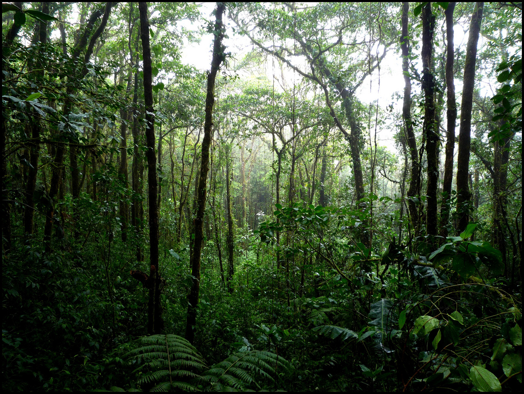 Rainforest by Victoria Reay, on Flickr