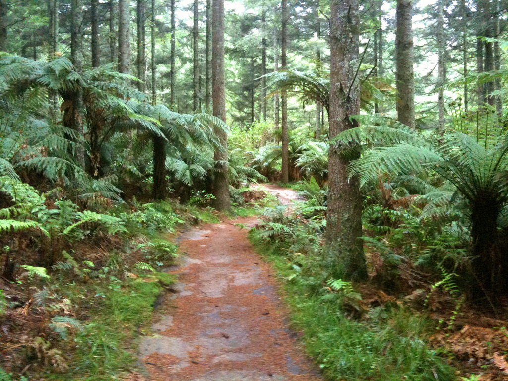 Mountain Biking in Rotorua, New Zealand by TRAILSOURCE.COM, on Flickr
