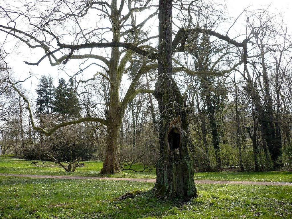 scary tree by Eddi 07- Free Stock, on Flickr