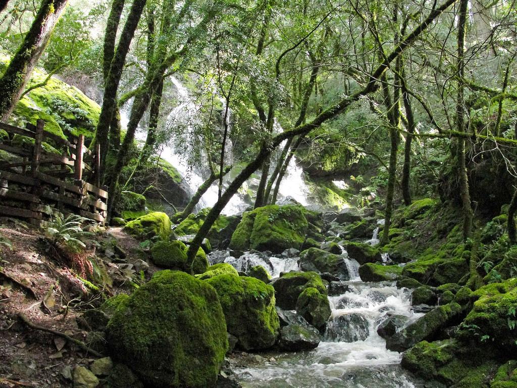 Falls on Cataract Creek on Mount Tamalpa by MiguelVieira, on Flickr