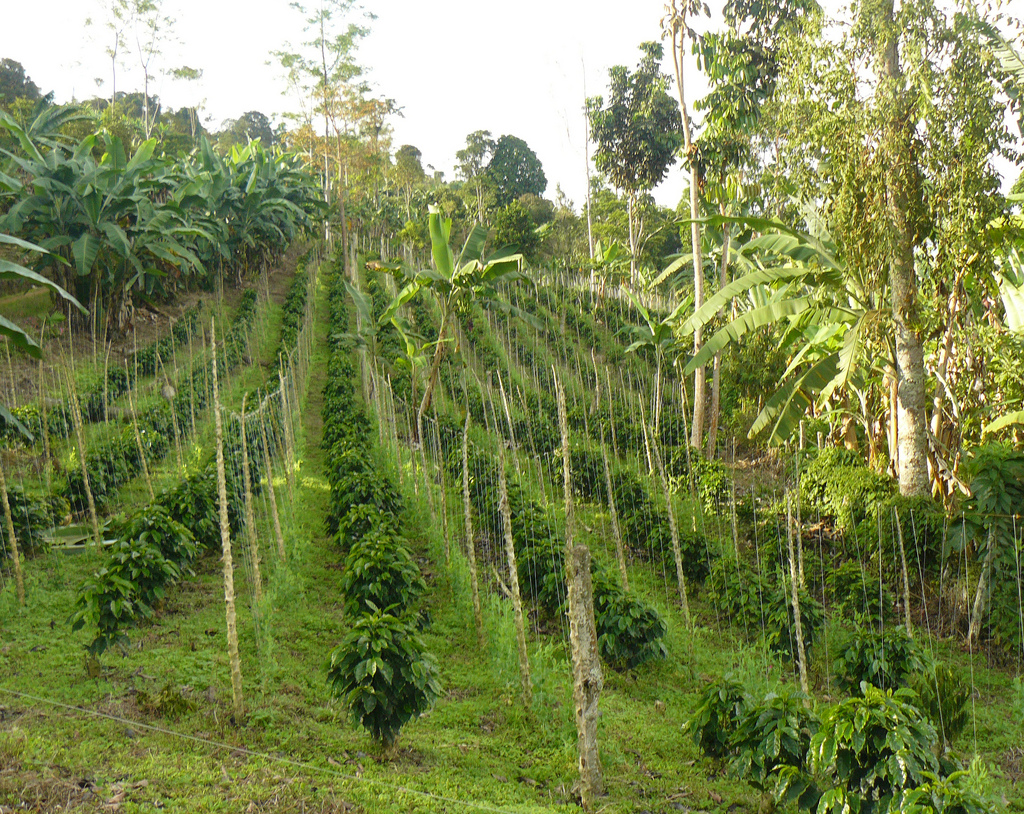 Reserve coffee farm in Colombia by U. S. Fish and Wildlife Service - Northeast Region, on Flickr
