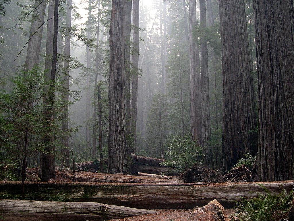 Rockefeller Forest, Humboldt Redwoods St by Jay Sturner, on Flickr