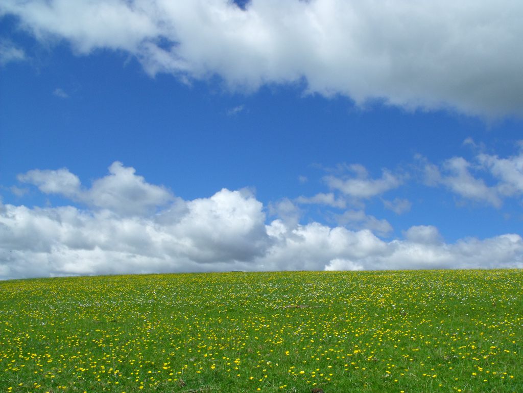 I see fields of green by Edd Turtle, on Flickr