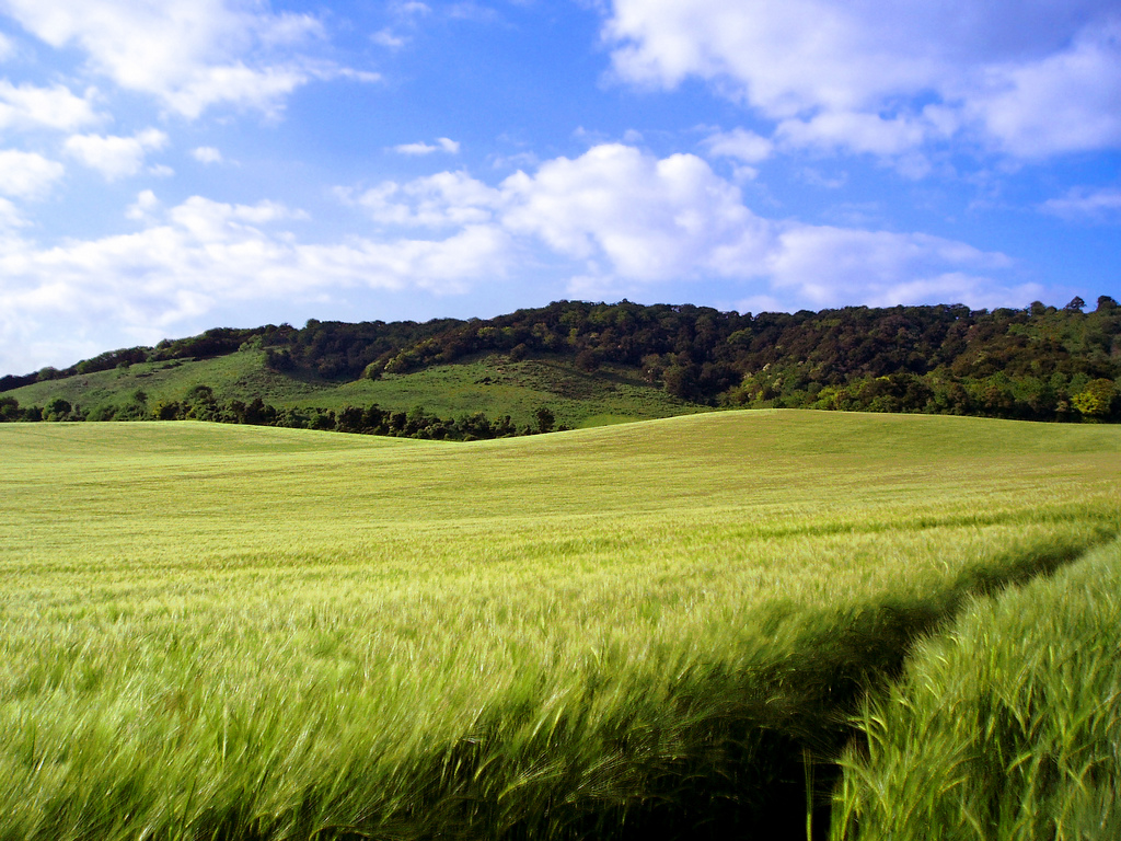 North Downs, Kent, England by Dimitry B, on Flickr