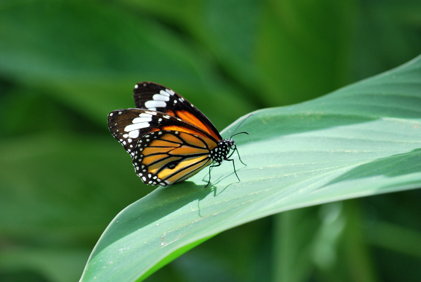 Butterfly World June 2010 by picto:graphic, on Flickr
