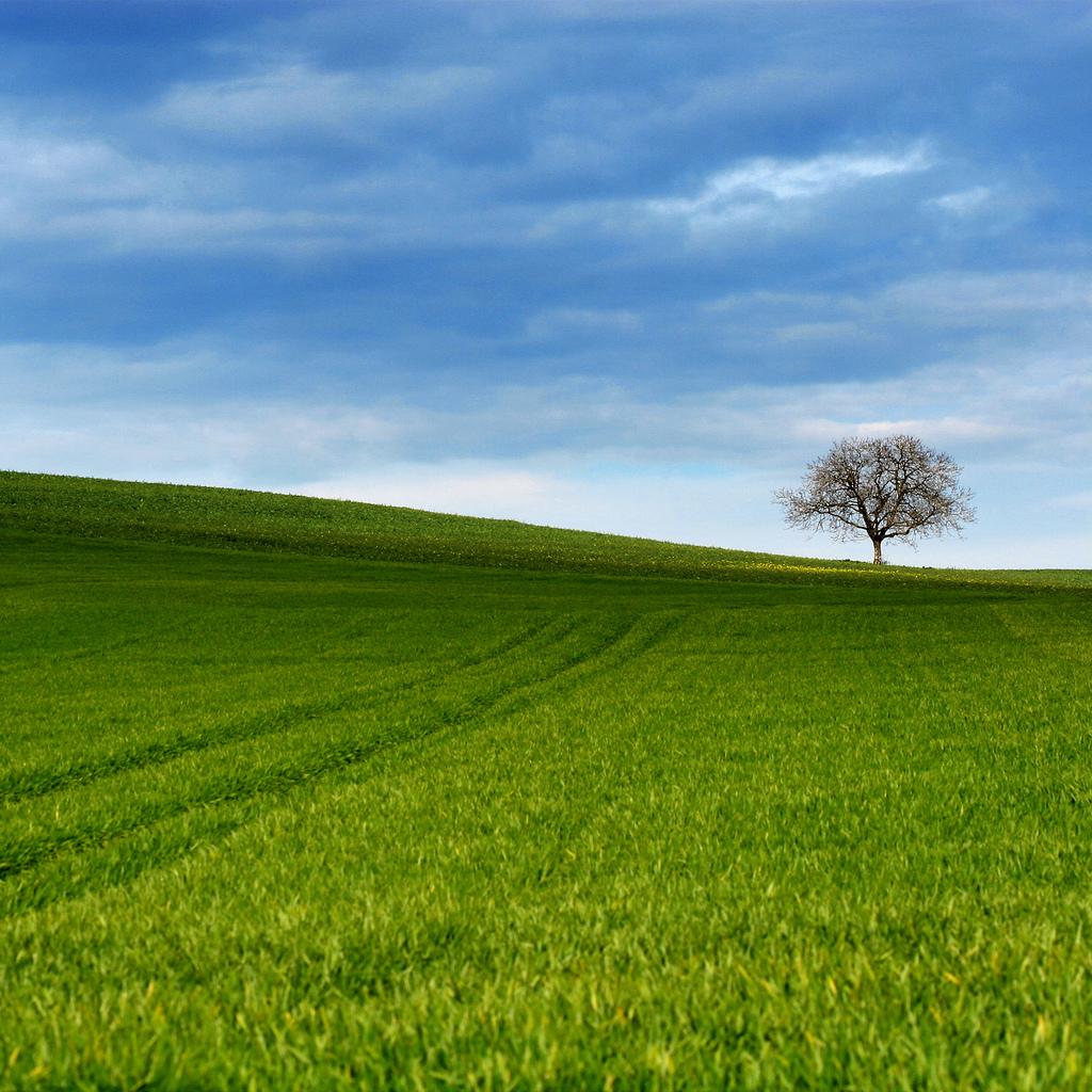 Sky Grass Tree by Brett Jordan, on Flickr