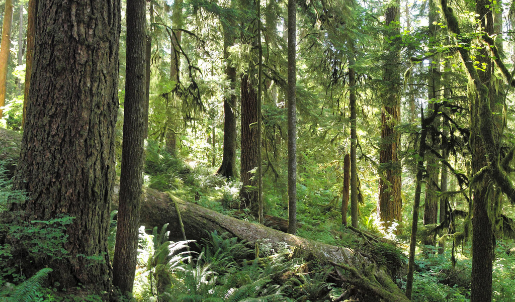 Forest on Olympic National Park Three La by MiguelVieira, on Flickr
