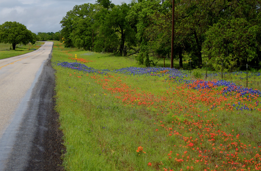 Flowers by the roadside, Central Texas H by roy.luck, on Flickr